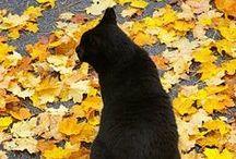 Black Cats / black cats kittens