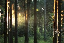 Nature: Forest / enchanted forest photographs