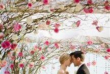 wedding / by Cris Pruser