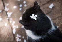 Cats / new account -- http://www.pinterest.com/kankantei2012/cats/