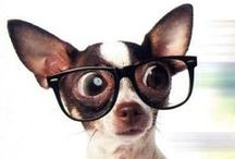 Chihuahuas~ / My Nani is my heart.. / by Karen Liana Carney