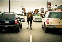 Alaska (Anchorage)~ / My birth place.. / by Karen Liana Carney