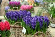 Gardeners Delight~ / Something I enjoy.. / by Karen Liana Carney