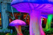 Magic of Mushrooms + Fungi~ / Beauty of mushrooms. / by Mindy Beer~
