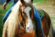 Addy / This board is about my passion HORSES! And barrel racing!! Here I come NFR!!!!! And my two favorite barrel racers of all time Sherry cervi!!And Brittany pozzi!!! And I love all the rest of the barrel racers!!! / by Ali Eisenach