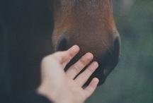 __Animals / by Ana Moreno