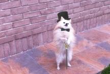 Fancy Doggies  / by Doggyloot Dog Lovers