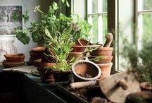 A gardener's space