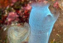 Corals Varieties / Landscapes of corals and underwater world