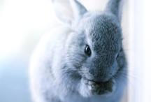 Conigli, Rabbits & Lapins