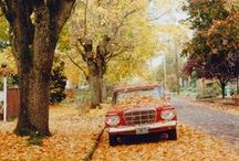 """△ lovely fall / """"Autumn...the year's last, loveliest smile."""" ― William Cullen Bryant"""