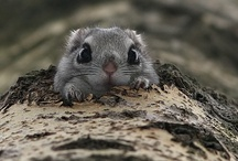 Animals that make me SQUEEEEEE! / by Terrea