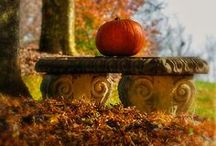 Fall / Everyone loves to decorate for Fall. The beautiful Autumn colors and cooler temps in Maryland along with all the Fall events makes Fall one of our favorite times of the year.