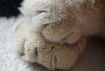 paws / packy zvířátek