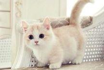 cats / kočičky