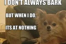 Funny canine captions / All the ways that dogs make us laugh