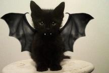 holiday : halloween