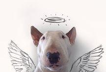 dog love / by Brenna Mitchell