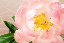 flowers / by Marisa Sasa