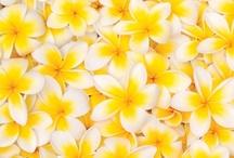 petals / by Brenna Mitchell