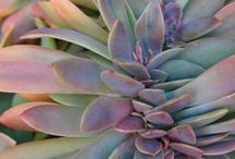 Succulents, Cacti, Botanic Exotica / Cacti and Succulents / by Susan Green