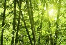 Instants Nature / Retour aux sources, invitation à la méditation et à la relaxation. Pour créer une ambiance 100% nature, on optera pour une déclinaison de teintes vertes: thé vert, carambole, luciole, bambou...associée à des beiges et à des bruns clairs.  Les motifs de branchages, les imitations de pelouse ou de forêt ainsi que les matières naturelles telles que le lin et l'osier seront vos meilleurs alliés pour créer le style Green Nature.