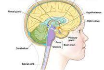 craniopharyngioma