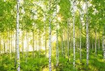 Refuge dans la forêt / Ressourcez-vous dans un confortable cocon de nature ! Un camaïeu de verts et un gris galet apaisant se rehaussent de touches jaune paille ou d'un vert soutenu. Motifs végétaux, écorces, bois et animaux de la forêt envahissent l'espace. Les matières authentiques comme un plaid de laine, des coussins, un tapis douillet et le bois naturel évoquent l'esprit de la forêt. Dégustez un thé fumant ou un bon roman lové au chaud dans votre refuge apaisant.