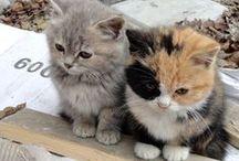 Katzen, Katzen, Katzen..