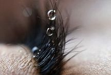 crops and close ups / by Victoria Roubin