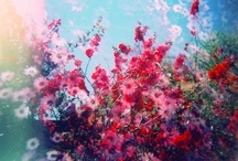 Flora / Plant-life, planters, gardening, arrangements / by Jillian Lea