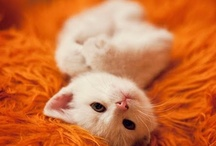 Kitty cuteness / by Pat Burge