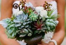 Succulents / Lake Chelan Florist | J9Bing Floral Design