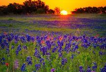 Texas / by Roxanna Ponton