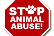 × Stop animal cruelty × / by Ivana