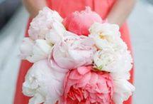 flowers flowers flowers / by Tamytha Cameron