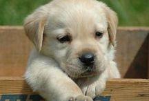 Doggie Love! / by Melissa Hargrove