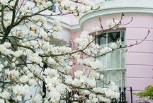 Spring / by dana