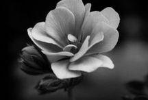 FLOWERS / by HANANAA
