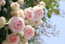 My Dream Garden / Petit jardin d'Eden