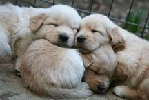 Puppies with Love