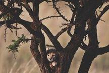 Animals / by Cri