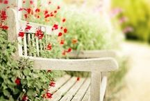 for my garden and yard / by Elmyra Gulch