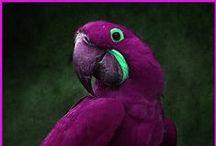 Birdie, Birdie :) / by Elmyra Gulch
