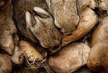 Animals_Rabbits / by Cri