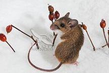ANIMALS_Mice / by Cri