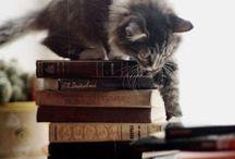 Animals_Cat / by Cri