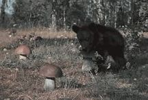 Animals_Bear With Me / by Cri