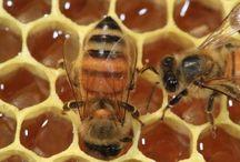 Sweet as Honey! / Bee keeping joy! / by Sil **