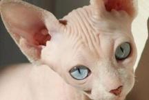 Here Kitty Kitty ^..^ / by Debbie Woodruff